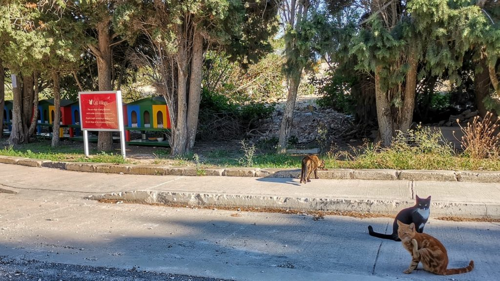 Malta Katzenhotel Nationalstadion