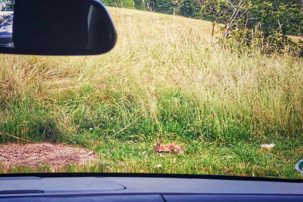 Kaninchen Hase Benanza Podcast